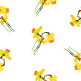 Spring narcissus watercolor seamless pattern Royalty Free Stock Photos