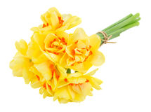 Spring narcissus Stock Photography