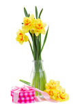 Spring narcissus Stock Photo