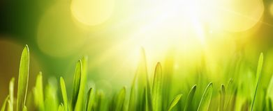 Spring Natural Background With Sun Royalty Free Stock Images