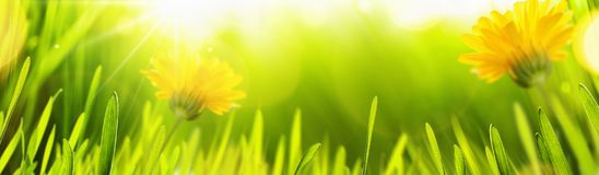Spring Natural Background With Sun Royalty Free Stock Image