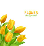 Spring Natural Bouquet with Yellow Tulips Flowers Isolated. Illustration Spring Natural Bouquet with Yellow Tulips Flowers Isolated on White Background - Vector royalty free illustration