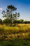 Spring Natural Landscape Stock Photography
