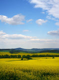 Spring nature. Beautiful spring nature landscape with blue sky and clouds Stock Photos