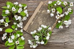 Still life with spring blossom  apple flowers Stock Images