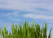 Spring nature background with grass and blue sky Stock Image
