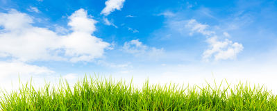 Spring nature background with grass and blue sky