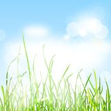 Spring nature background. With grass and bokeh lights in the blue sky Stock Image