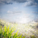 Spring nature background with grass and cloudy sky Stock Photo