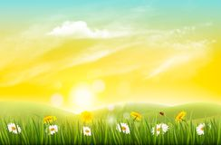 Spring nature background with grass and flowers. vector illustration