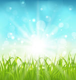 Spring nature background with grass. Illustration spring nature background with grass - vector Stock Image
