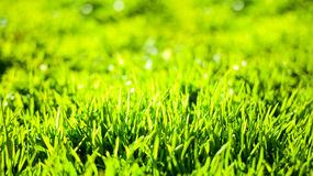 Spring nature background with green blurred grass Stock Image