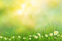 Spring nature background Stock Photo