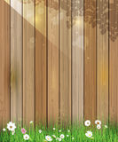 Spring nature background. Green grass and leaf plant, White Gerbera, Daisy flowers and sunlight over wood fence Royalty Free Stock Image