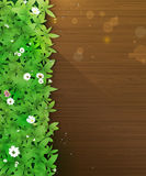 Spring nature background. Green grass and leaf plant, White Gerbera, Daisy flowers and sunlight over wood floor Royalty Free Stock Image