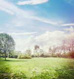 Spring nature background with lawn , trees and beautiful  sky Stock Images