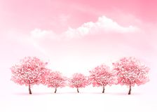 Spring nature background with a pink blooming sakura tree. Stock Image