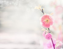 Spring nature background with pink pale almond flowers Stock Images