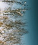 Spring nature background. reflection in water. spring wallpaper. Abstract blurred background. Springtime. copy space. Spring nature background. reflection in stock photography