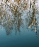Spring nature background. reflection in water. spring wallpaper. Abstract blurred background. Springtime. copy space. Spring nature background. reflection in stock images