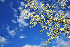 Spring nature Royalty Free Stock Photography