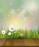 Spring nature background.Vector  Green grass, field with white Gerbera, Daisy flowers meadow and sun light over wood floor. Stock Images