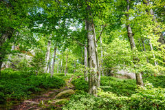 Spring Nature. Beautiful scene in green forest Stock Photography