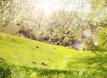 Spring nature and blossom landscape Stock Images
