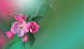 Spring Nature Blossom Web Banner Or Header.Abstract Macro Photo.Artistic Green Background.Fantasy Design.Colorful Wallpaper. Stock Photos