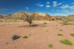 Spring in nature desert park of Timna, Israel Royalty Free Stock Photos