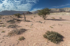 Spring in nature desert park of Timna, Israel Royalty Free Stock Images