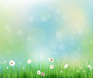 Spring nature field with green grass, white Gerbera- Daisy flowers at meadow and water drops dew on green leaves. Vector illustration Spring nature field with Stock Photo