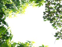Spring nature frame Stock Image