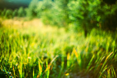 Spring Nature Green Grass Natural Blurred Absract Background. Bo Royalty Free Stock Photo