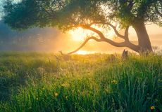 Spring green landscape. Spring background. Spring nature. Sun illuminates green meadow with tree in fog. Beautiful warm morning sunlight royalty free stock photos