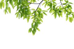 Spring nature green leaf Stock Photo