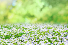 Spring nature Stock Image