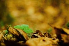 Spring nature. Photo of Fragaria vesca. Spring photo Stock Photos