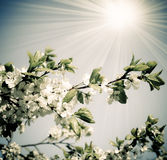 Spring nature in retro style Stock Photos