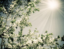 Spring nature in retro style Royalty Free Stock Photography