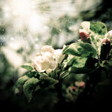 Spring nature in retro style stock photography