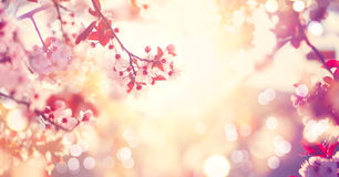 Spring nature scene with pink blooming tree Royalty Free Stock Images