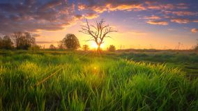 Spring nature. Sunny morning landscape with amazing sky. Grassy meadow in sunlight. Rural scene. With bright sun stock photos
