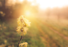Spring nature at sunrise Royalty Free Stock Images