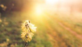 Spring nature at sunrise Stock Image