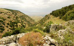Spring Nature view- Galilee Mountain. Royalty Free Stock Photography