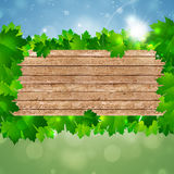 Spring Nature Wood Background Stock Photos