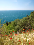 Spring near the sea Stock Photo
