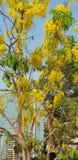 Spring at nearby. Somewhere in Mumbai, India Stock Image