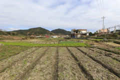 Spring neat farmland. In dingcuncun village, tong'an district, amoy city, china. farmers are ready to cultivate. i wish a good harvest this year Stock Photos